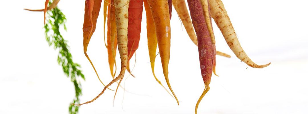 Mangold & Muskat Karotten