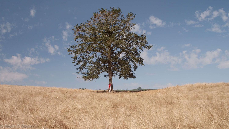 Baum auf weiter Ebene